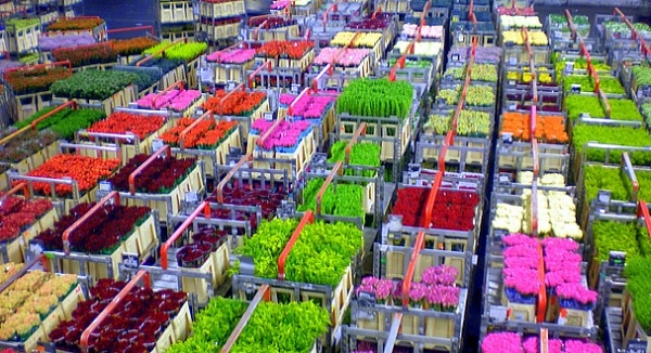 Admire the worlds largest flower auctions at Aalsmeer