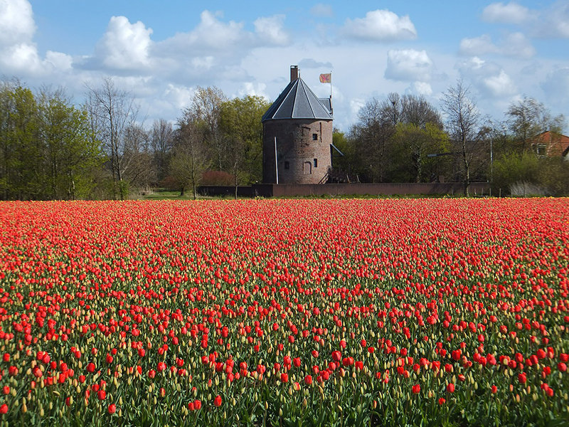 Lisse - the centre of the bulb fields.