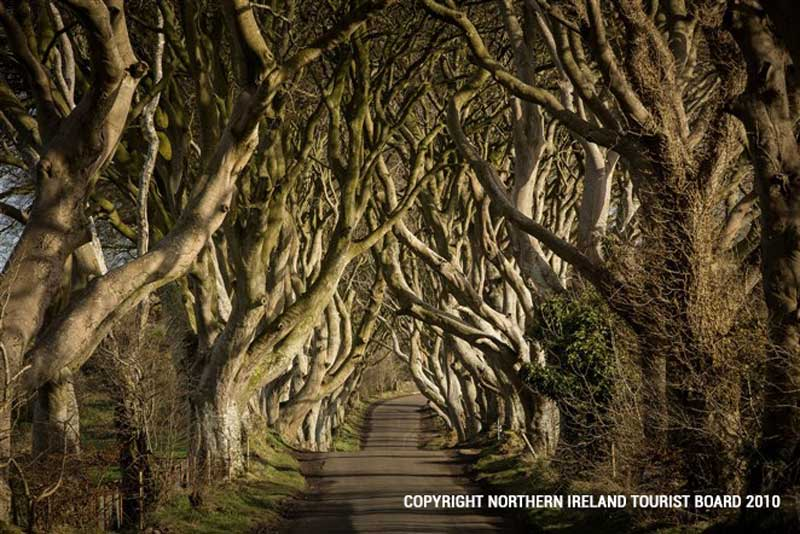 The Dark Hedges - an atmospheric avenue of beech trees used to depict the Kingsroad, which was usually plagued by bandits and thieves