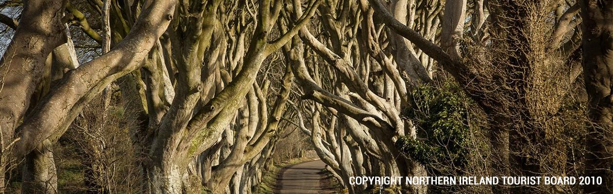 The-Dark-Hedges-Banner-Copyright-Northern-Ireland-Tourist-Board-2010