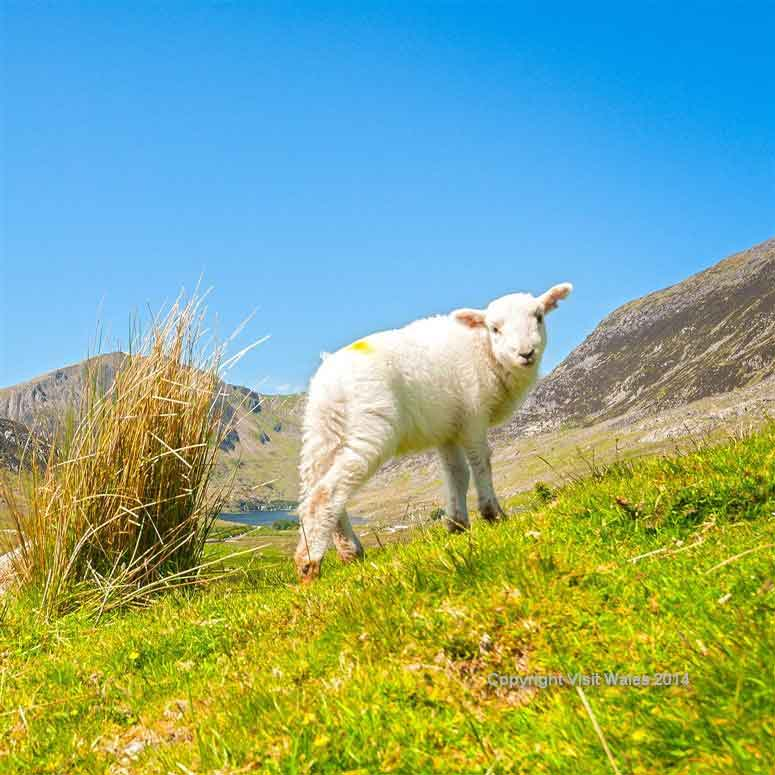 Pass the Snowdonia National Park and picturesque Welsh villages
