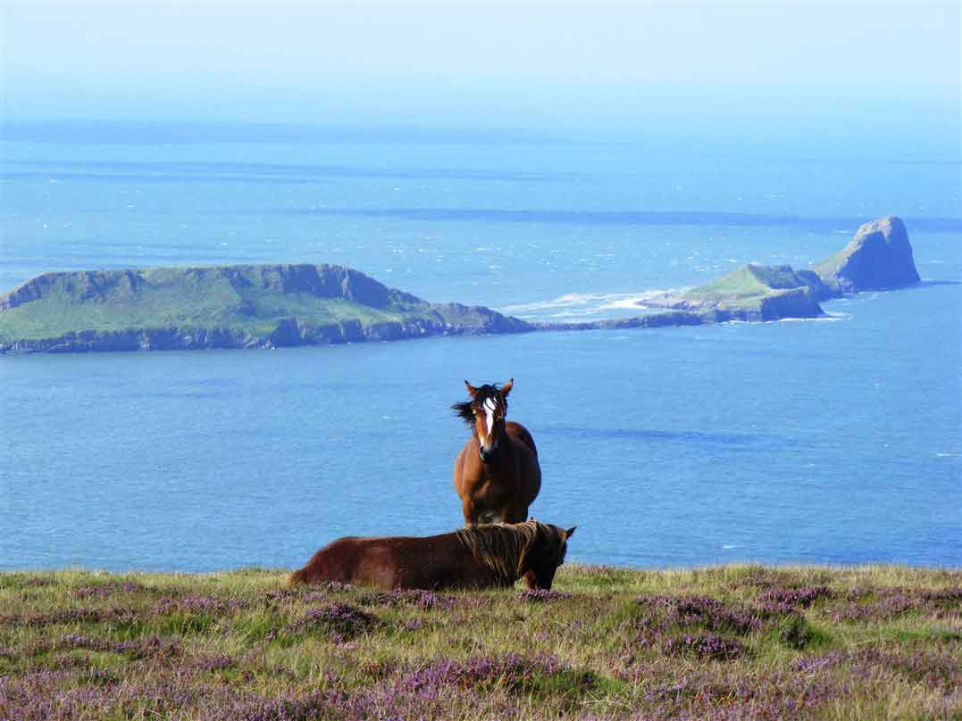 Discover the natural beauties of the coast of South Wales
