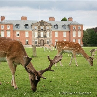 Dunham Massey - a Georgian house, set in a magnificent deer-park