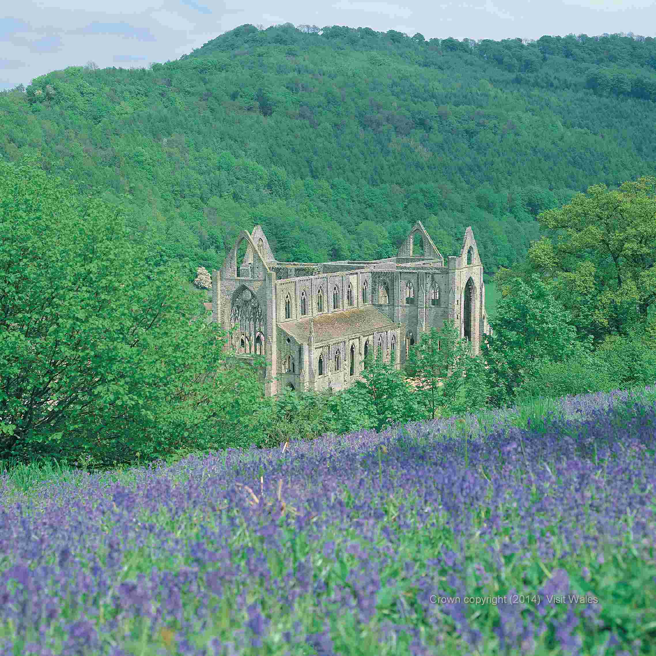 Visit the remains of  Tintern Abbey, one of the greatest monastic ruins of Wales.